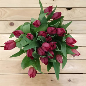 Surrender Tulips | Buy Flowers in Riyadh Jeddah KSA | Gifts