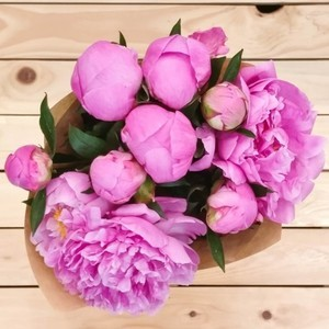 Eternity Peony (10 Stems) | Buy Flowers in Riyadh Jeddah KSA | Gifts