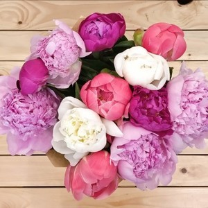 Euphoria Peony (12 Stems) | Buy Flowers in Riyadh Jeddah KSA | Gifts