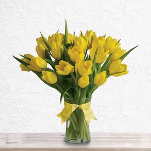20 Sunny Day Tulips