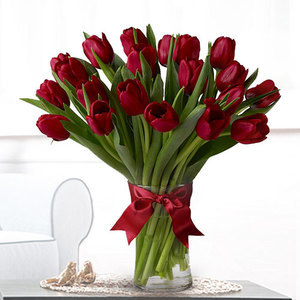 Tulipa Kiss